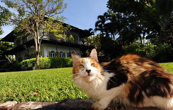 Hemingway Home & Museum at Florida