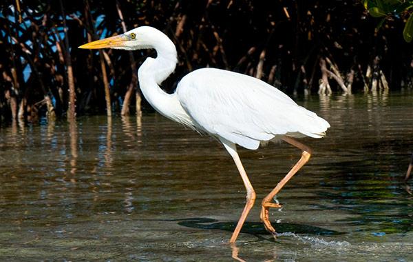Birding at Florida