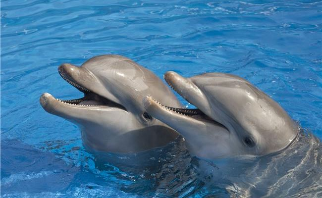 Dolphin Research Center in Florida