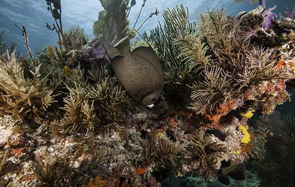 Florida Keys Eco-Discovery Center