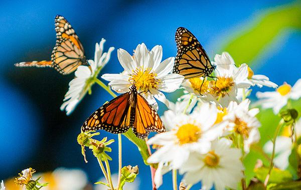 Key West Butterfly Conservatory