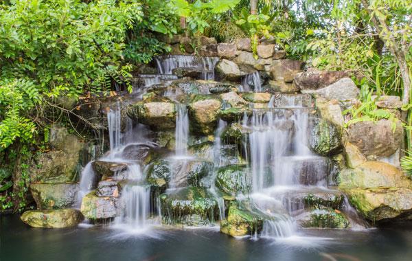 Key West Tropical Rainforest & Botanical Garden