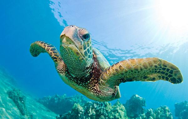 Key West Turtle Museum