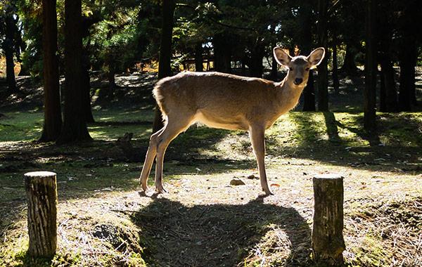 National Key Deer Refuge at Florida