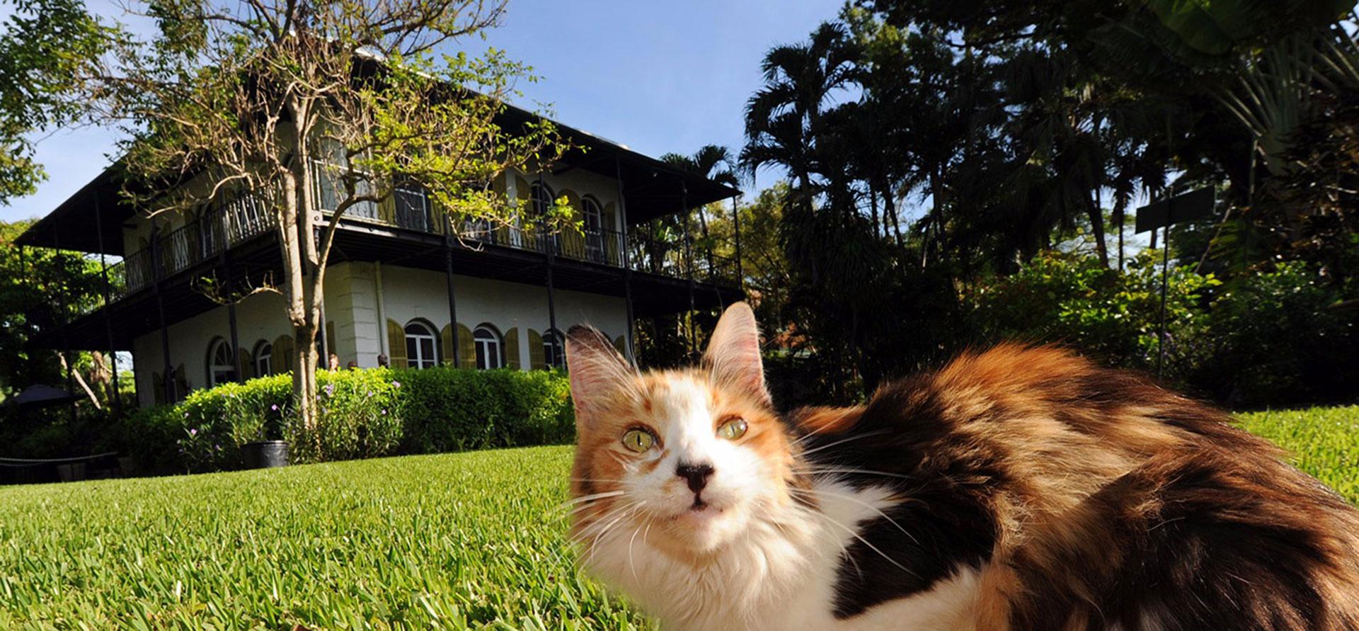 Florida Hotel Hemingway Package