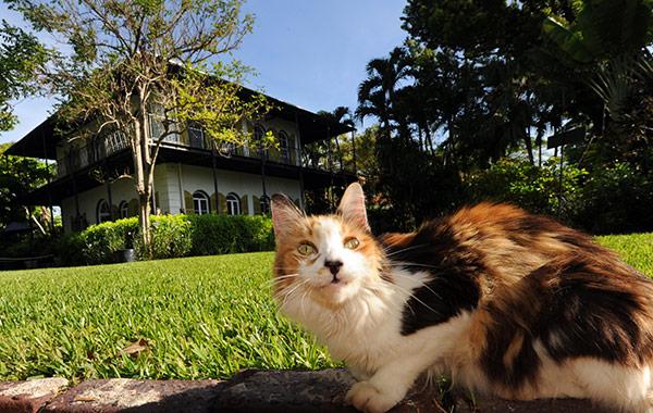 Key West, Florida Hotel Hemingway Package